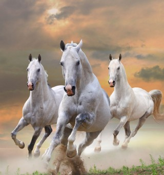 白色骏马图片