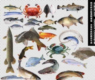 水產魚類透明背景元素