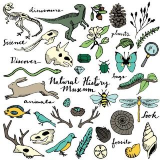 自然野生動植物矢量素材