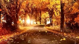 金色秋天回憶舞臺美麗風景視頻素材